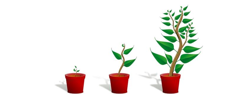 Wachsen, aber richtig! Unsere Tipps für die Personalpolitik in wachsenden Unternehmen